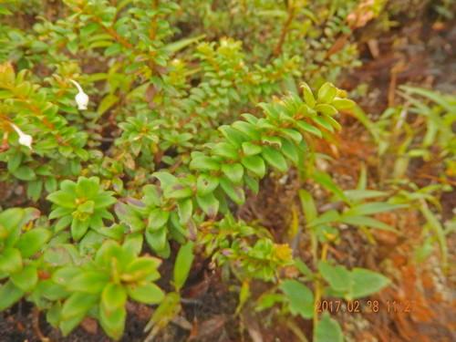 170228 2017 ecuador podocarpusnationalpark flower wildflower