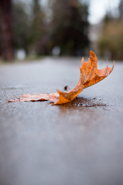 Photo:Leaf on the ground in autumn sunlight By wuestenigel