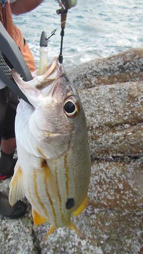 Koh Samui- Fishing サムイ島 つり
