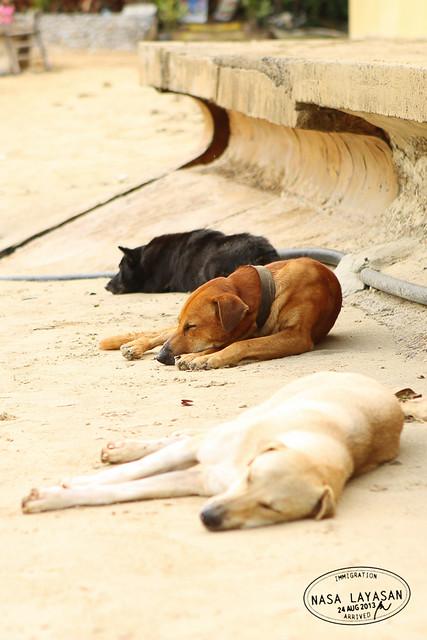 Lazy Trio at the town beach