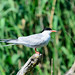 Typical Terns - Photo (c) Costel Slincu, some rights reserved (CC BY-NC-SA)