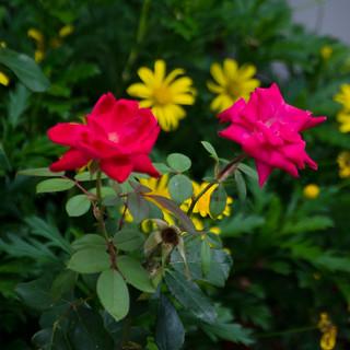 Flowers06