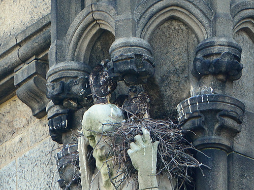 Cathedral Hawk Nest (12000