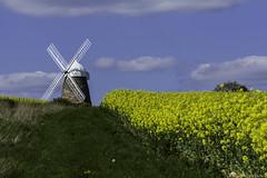 Halnaker Windmill