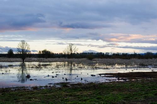travel sunset lake reflection water washington nikon dusk ducks wa nikkor wildliferefuge ridgefield ridgefieldnationalwildliferefuge d7000 nikond7000 18105mmf3556gedafsvrdx