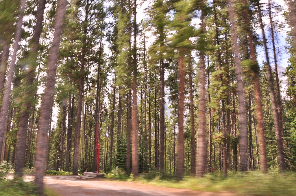 Two Jack Lake Banff Canada Trees