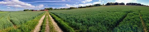 summer panorama skåne sweden farm farming crops tornahällestad sweeppanorama sonyxperiaz1 xperiaz1