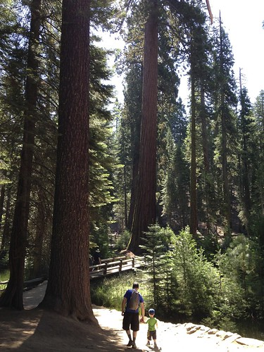 Hiking Mariposa Grove