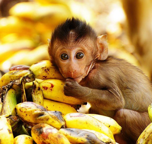 bananas diarioecologia