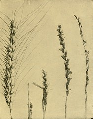 "Image from page 148 of ""Agriculture and the farming business"" (1917)"
