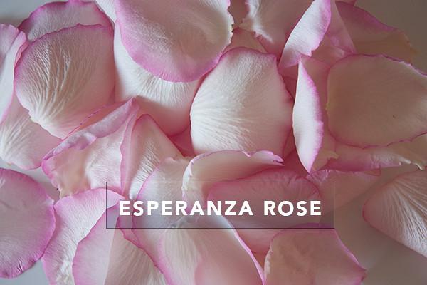 Esperanza-Rose