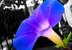 #flower #colorsplash #nature