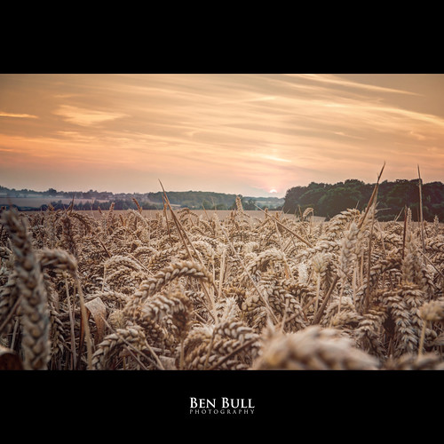 uk sunset england orange field landscape evening countryside corn nikon wheat harvest d800 2470 benbullphoto