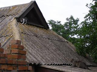 Cat Stalking Kitten
