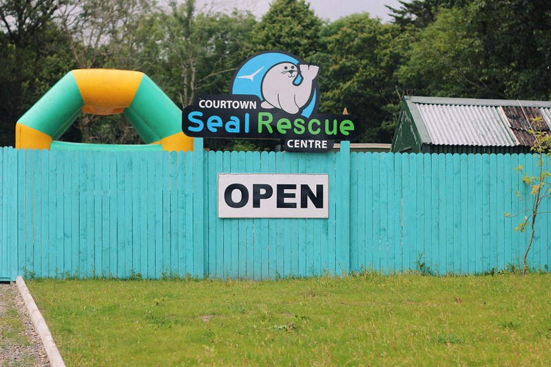 seal rescue centre courtown