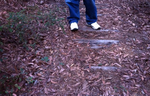Hoffman's Mill: Old Rail Sleepers Visible On Path