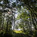 Forest&Light