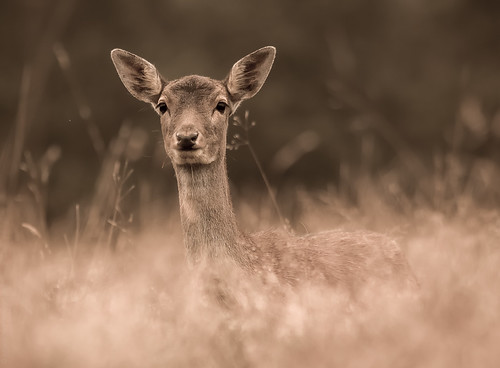 Doe, a deer, a female deer // 20 09 14