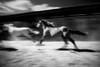 Horse Ranch. Homestead, Fl.