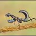 Most popular in my gallery.   42,500+ Views,  3000+ COMMENTS/AWARDS!!!  550+ Favorites Mantis Tigre by GORIGONZALEZ