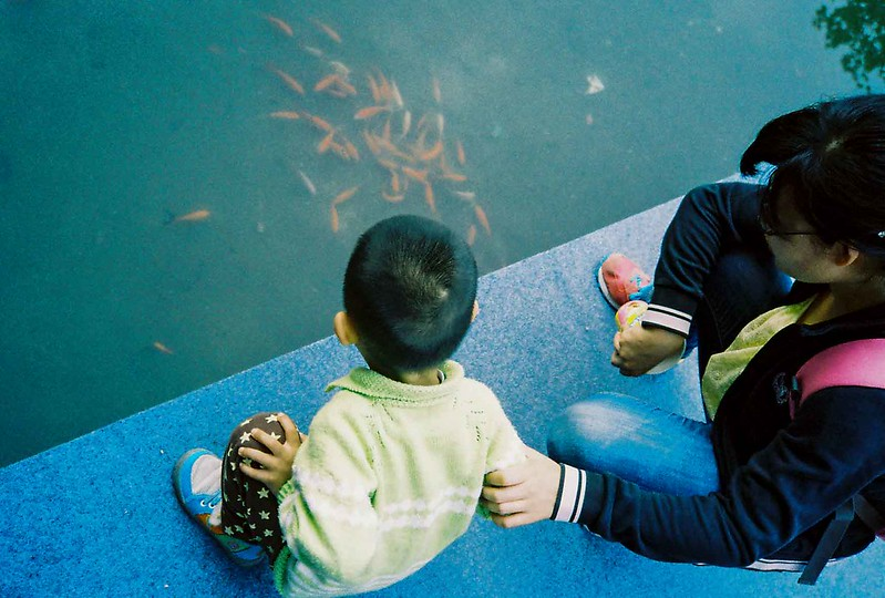 68/365: Fish Gatherings