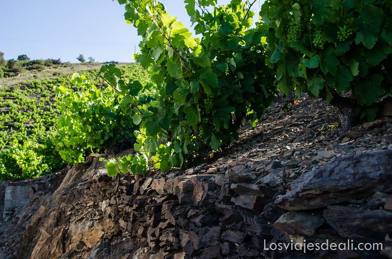 ruta de los viñedos cerca de argeles sur mer y Paulilles