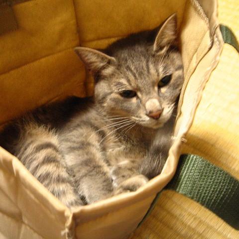 袋にはとりあえず入る by Chinobu