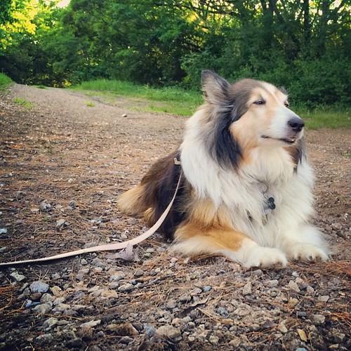 A doggie zen moment. #dogs #zen #peace