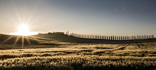 Tuscany Morning #2