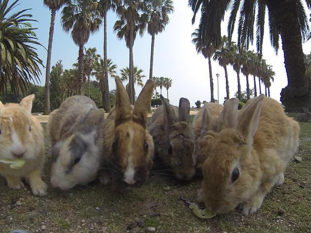 Okunoshima - The Bunny Rabbit Island