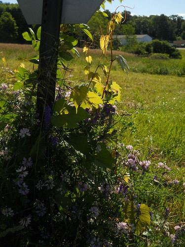 wildflowers and vines