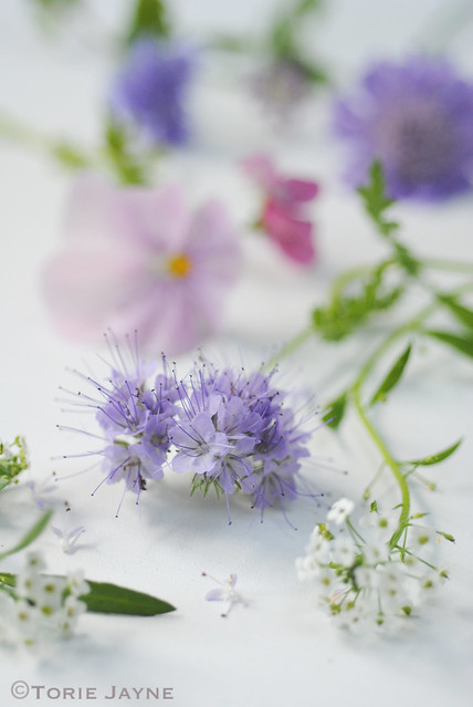 Cut flowers from my garden