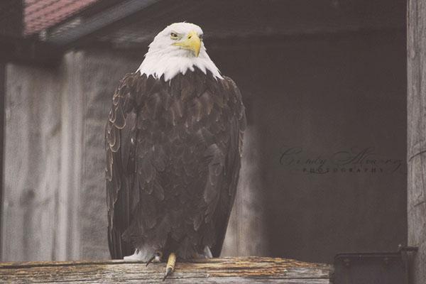 blog eagle