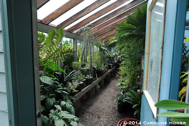 inside the greenhouse