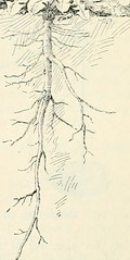 """Image from page 63 of """"First course in biology"""" (1908)"""