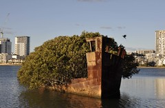 SS Ayrfield - Shipwreck Bay (Homebush Bay - 1)