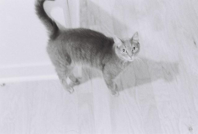 cat photos, poorly metered