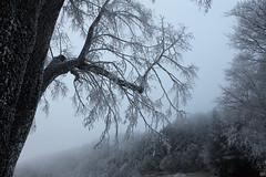 Dans la forêt de la Princesse de glace... (Violay France). - Photo of Saint-Cyr-de-Valorges