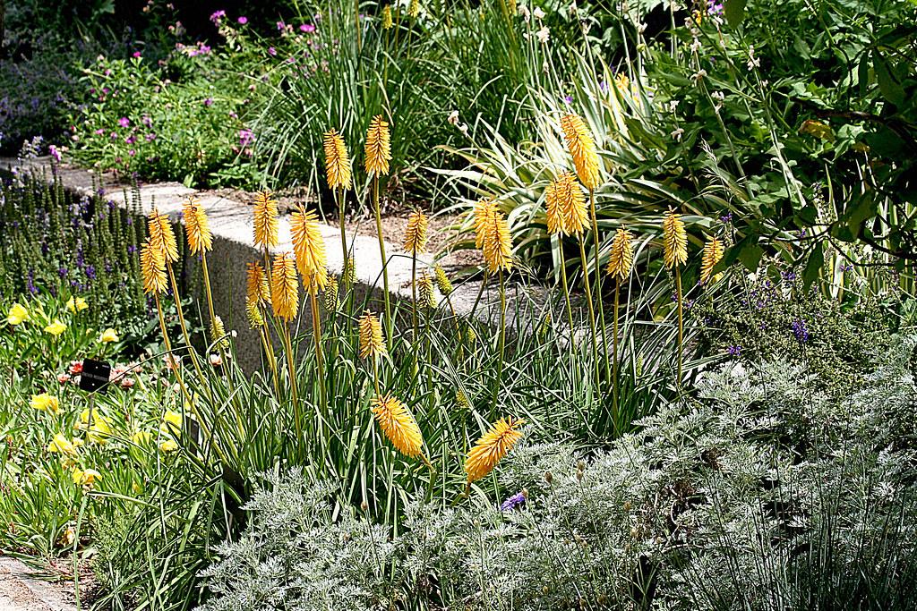 las alegres platabandas del Jardín Botánico de Madrid
