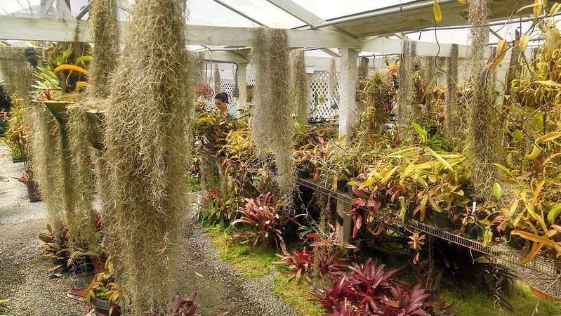 Bromeliad and Tillandsia display at California Carnivores.