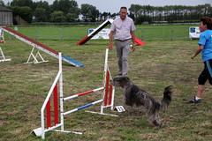 dog sports(1.0), animal sports(1.0), sports(1.0), pet(1.0), hurdle(1.0), conformation show(1.0), dog agility(1.0),
