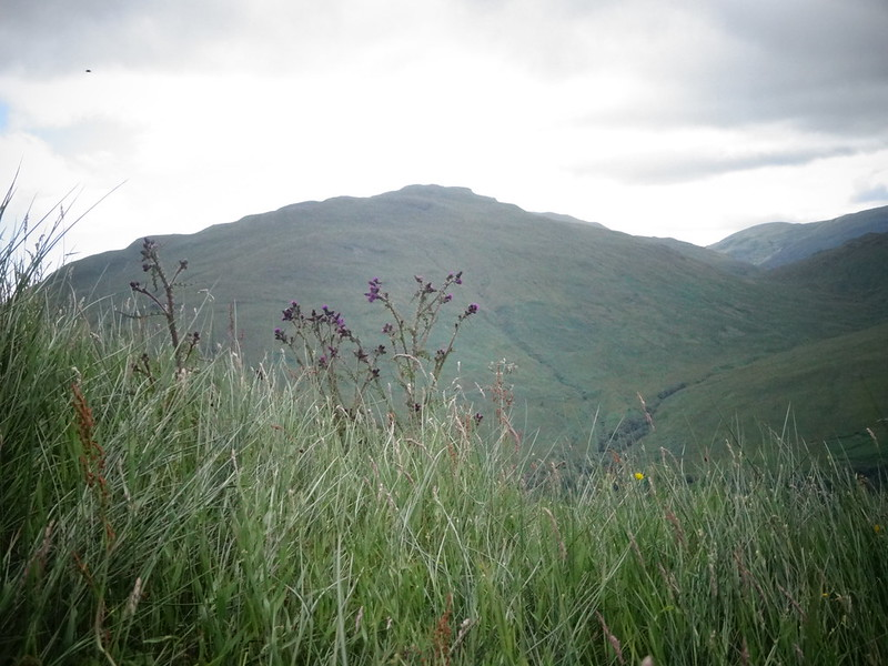 Thistles and wild grass