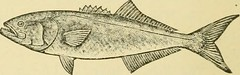 "Image from page 73 of ""Smiley's cook book and universal household guide; a comprehensive collection of recipes and useful information, pertaining to every department of housekeeping .."" (1895)"