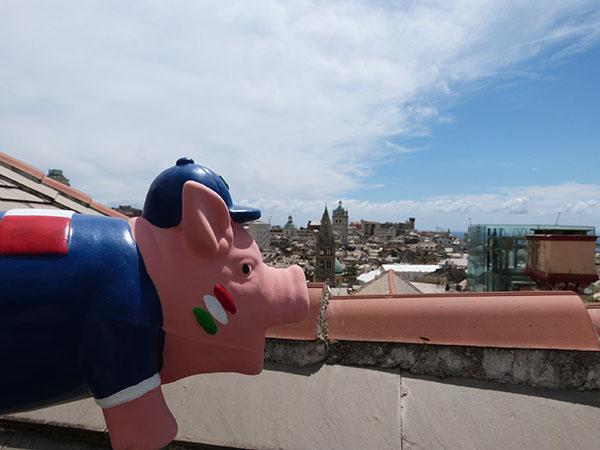 le cochon visite