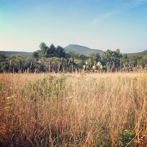 Morning walk: view of Mount Norwottuck #amherst #summer #westernma #morning