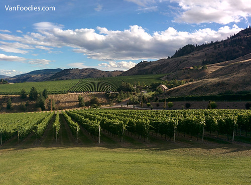Vineyards along Golden Mile Bench