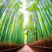 Arashiyama Bamboo Forest in Sagano, Kyoto, Japan by Daniel Peckham