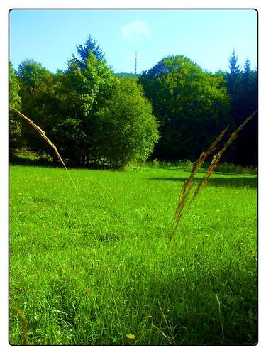 nature picaday apicaday miklavz trdinovvrh