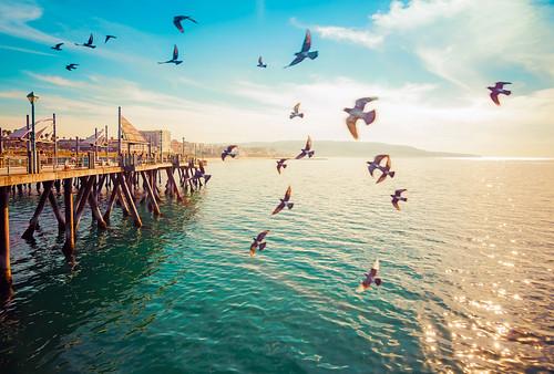 ocean california light sea sun beach birds la pier losangeles nikon redondo redondobeach d800 onthepier meeyak