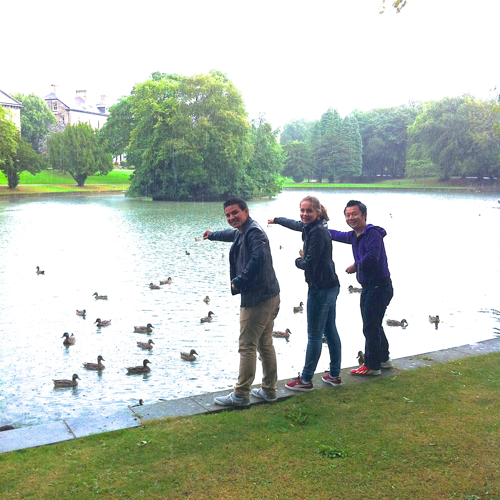 Feeding Ducks in the Rain